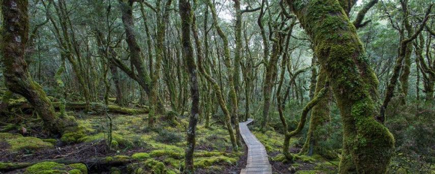 Enchanted Forest Walk Trail Hiking Australia
