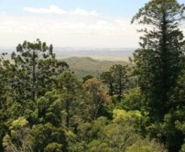 Barker Creek Lookout Track