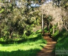 Burnside Walks - D - Beaumont Circuit