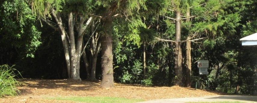 Carole Green Walkway - John Oxley Reserve
