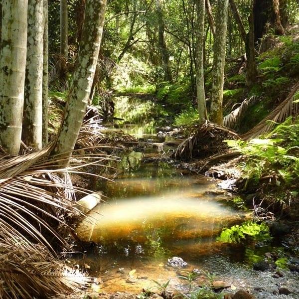 Eastern Escarpment Conservation Area Trail