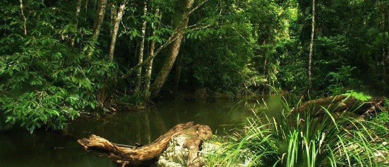 Jumrum Creek Walk