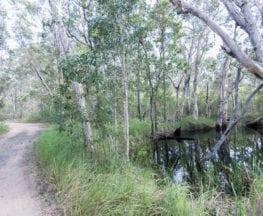 Melaleuca Track