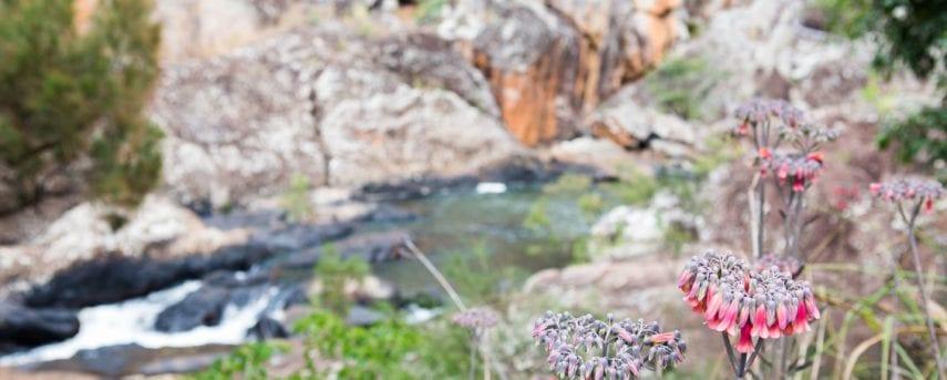 Misty Mountains - Koolmoon Creek Track