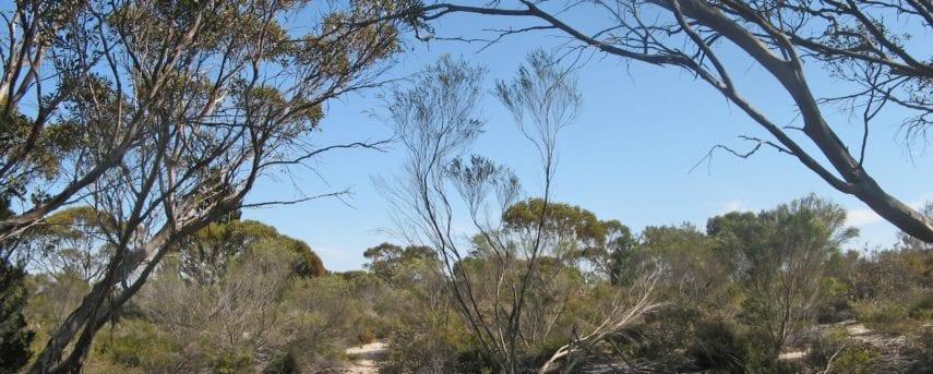 Monarto Conservation Park Walking Trail