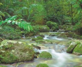 Mossman Gorge Rainforest Circuit