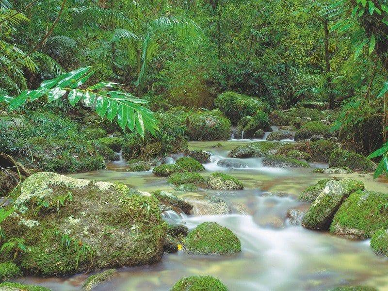 Mossman Gorge Rainforest Circuit