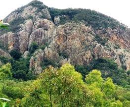 Mount Greville Track