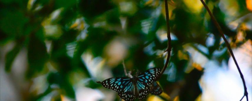 Natural Wonderland