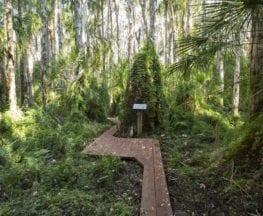 Paperbark Trail