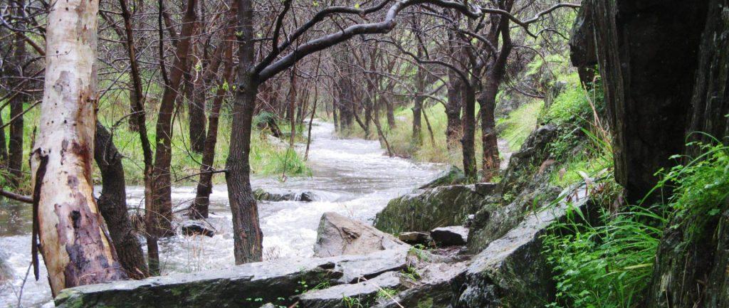 Sturt Gorge River Trail Circuit