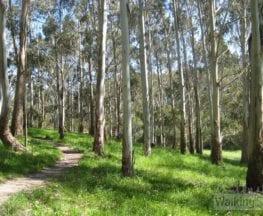 Woorabinda Bushland Reserve Circuit