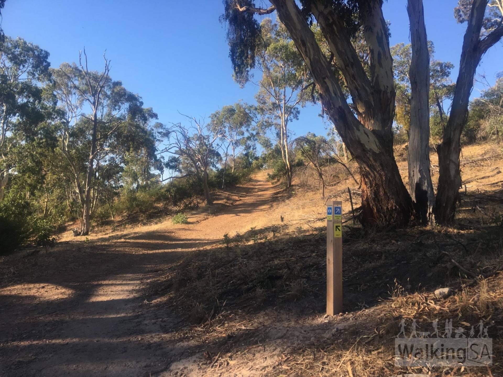 Yellowtail Anstey Hill Circuit