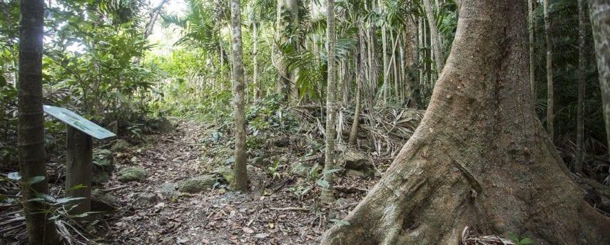 Yuibera Yuwi Trail
