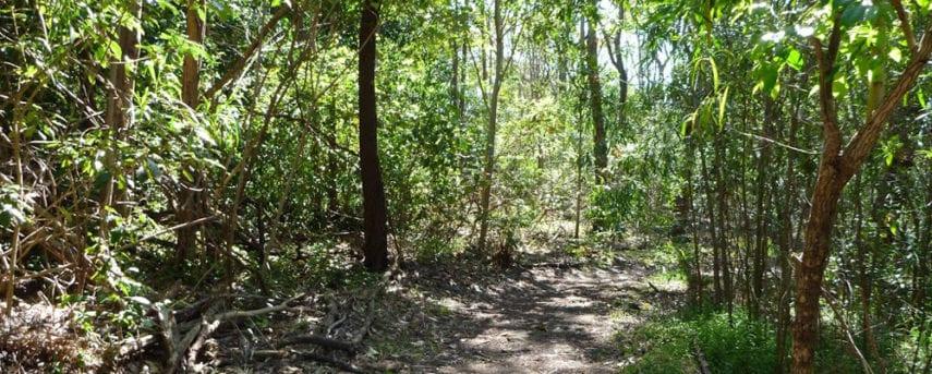 Boronia Bushland Trails Boronia Bushland Reserve