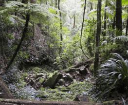 Buaraba Creek Ravensbourne National Park