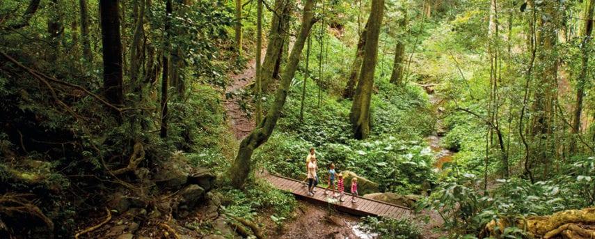 Paradise to Westcott Bunya Mountains National Park