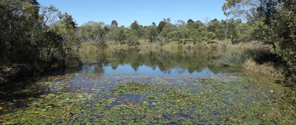 Wetland Outlook Circuit Berrinba Wetlands