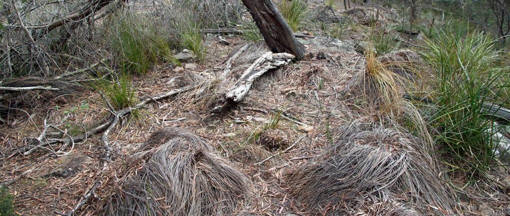 Cinnamon Fungus Dieback
