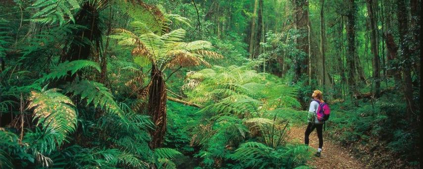 Box Forest Track Main Range National Park