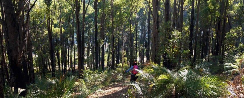 King Jarrah Heritage Trail