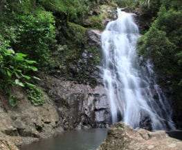 Araucaria Falls