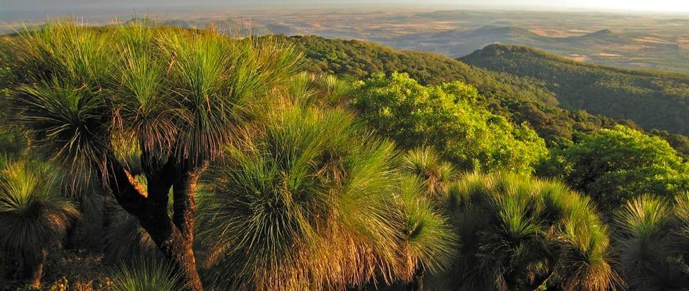 Scenic Circuit Bunya Mountains National Park