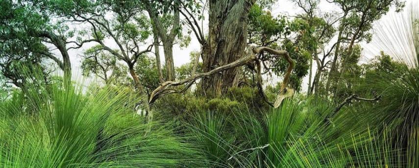 Honan Mint Trail Trail Hiking Australia