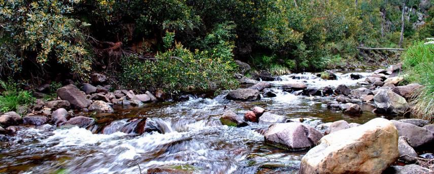 McMillians Walking Track Trail Hiking Australia