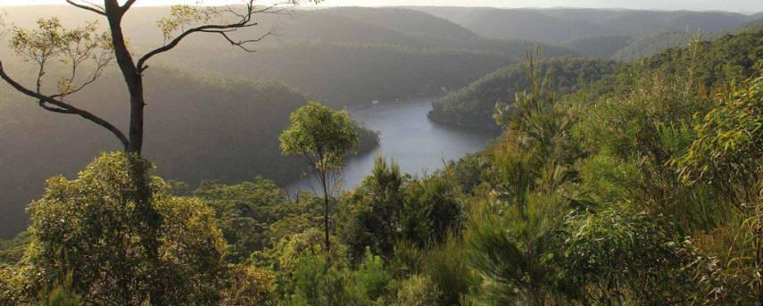 The Great North Walk Trail Hiking Australia