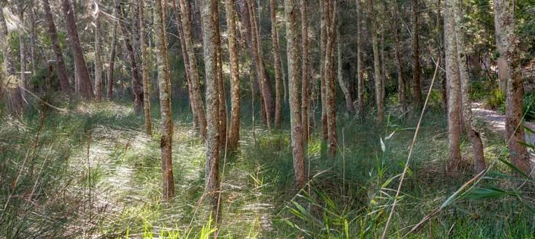 Anabranch loop track Trail Hiking Australia