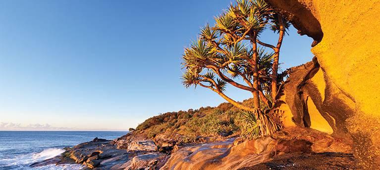 Angourie walking track Trail Hiking Australia