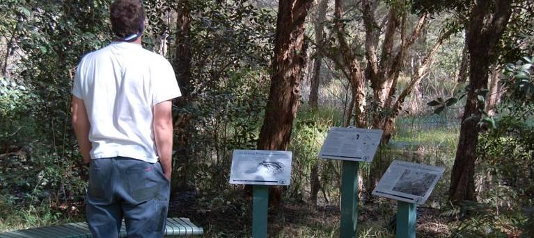 Awaba Bay Foreshore walk Trail Hiking Australia