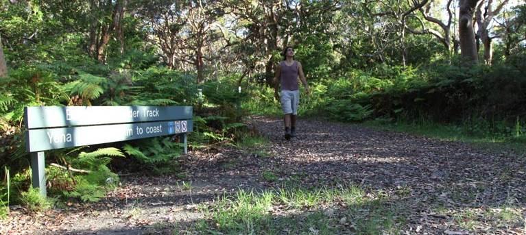 Banks-Solander track Trail Hiking Australia