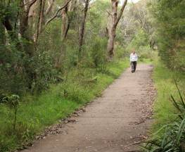Bellamy fire trail Trail Hiking Australia