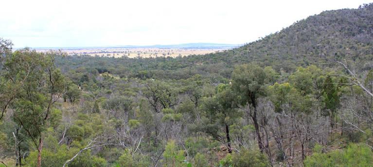 Ben Hall's Cave walking track Trail Hiking Australia