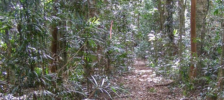 Big Scrub loop walking track Trail Hiking Australia