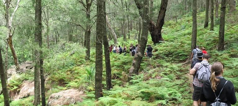 Birrawanna walking track Trail Hiking Australia