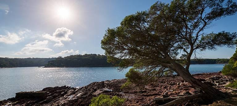 Bittangabee Bay to Green Cape walking track Trail Hiking Australia