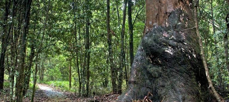 Blue Gum loop trail Trail Hiking Australia