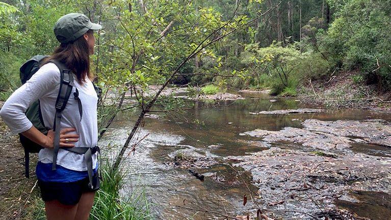 Boggy Creek walk Trail Hiking Australia
