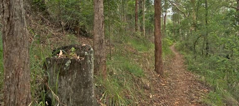 Border loop walk Trail Hiking Australia