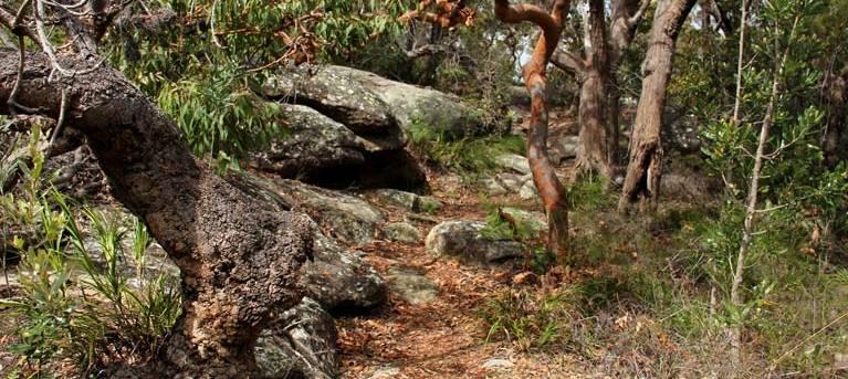Box Head track Trail Hiking Australia