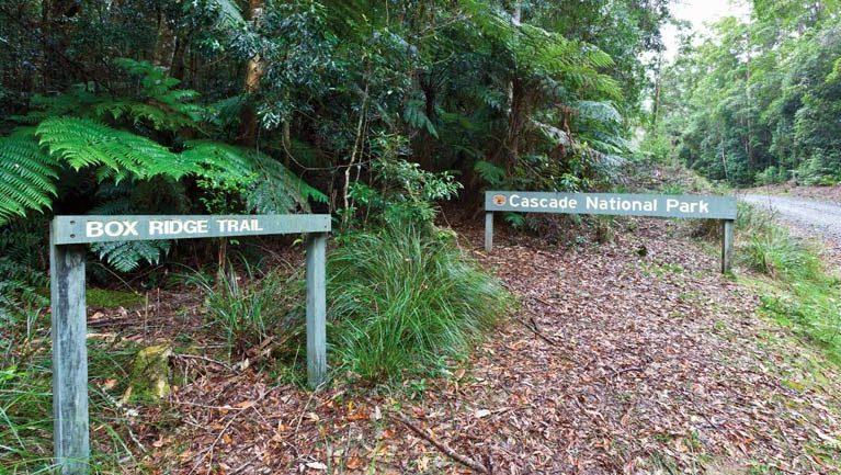 Box Ridge walking track Trail Hiking Australia