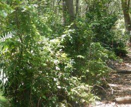 Bridle trail Trail Hiking Australia
