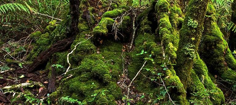 Brindle Creek walking track Trail Hiking Australia