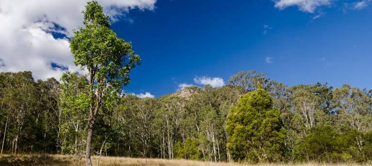 Brush Turkey track Trail Hiking Australia