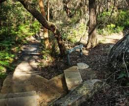 Bullimah Spur track Trail Hiking Australia