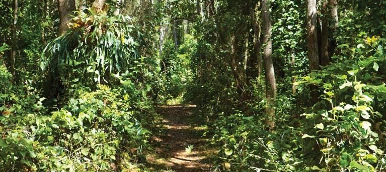 Bundagaree Rainforest walk Trail Hiking Australia