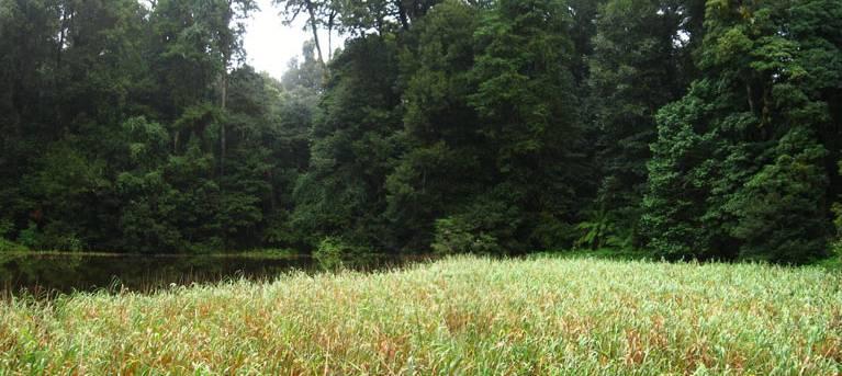 Burraga Swamp walking track Trail Hiking Australia